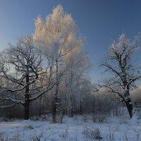 Мороз и солнце :: Светлана