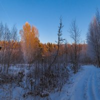На лыжне :: Сергей Цветков