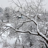 Дерева вы мои, дерева... :: Валентина  Нефёдова