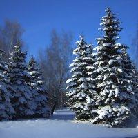 Солнечный зимний день :: Valery Remezau
