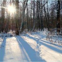 Про солнышко лесное в декабре.. :: Андрей Заломленков