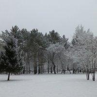 Зимний пасмурный день :: Наиля
