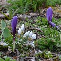 Воспоминание о весне :: Olga F