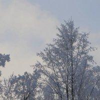 Зима в вышине :: Надежд@ Шавенкова