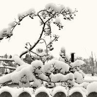 Эх, снег, снежок... :: Татьяна Помогалова