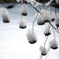 Снежок принарядил. :: Любовь