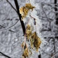 Забавы зимушки зимы. :: Алексей .