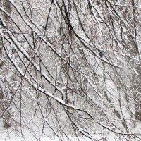 Зимние красоты! :: Жанна