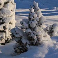 И зимой запахло отовсюду :: Татьянка *
