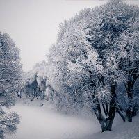 Зима здесь.. :: Марина Лукина