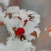 Морозный плен :: * vivat.b *