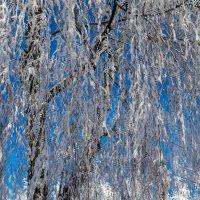 зима во всей красе. :: юрий макаров
