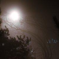 Украденный свет :: Маргарита Константинова