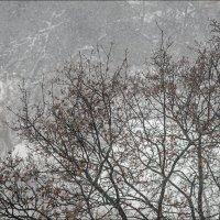 ...Белый снег. Ветер, ветер! На ногах не стоит человек. Ветер, ветер – На всем божьем свете! А. Блок :: Юрий Васильев