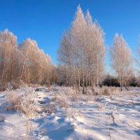 Берёзы в снежной тишине... :: Нэля Лысенко