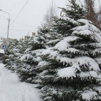 Много снега! :: Татьяна Гусева