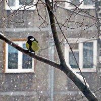 А снег идёт :: Лариса