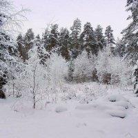 Все укрыто белым покрывалом и земля неспешно дремлет зимним сном :: Павлова Татьяна Павлова