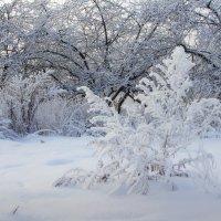 Ажуры зимы :: Наталья Лакомова