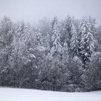 Зимний лес :: Ольга Милованова