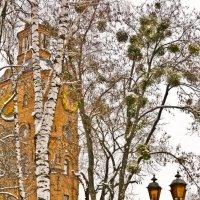 Фонари и омела на деревьях :: Ольга Винницкая (Olenka)