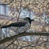Ворона голубоглазая :: Алексей Виноградов
