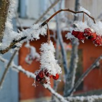 Сладкая ягода :: Ольга