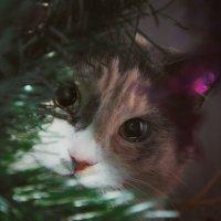 Новогодний котик :: Александр Довгий