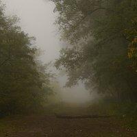 Туман в лесу.... :: Юрий ЛМ