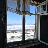 The Window 2020 :: Владимир Куликов
