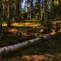 весенний лес :: Илья
