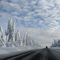 Зимняя дорога :: Валерий Молоток
