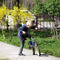 С другом велосипедом :: Татьяна Смоляниченко