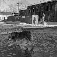 ВИЛиПЕС :: Валерий Михмель