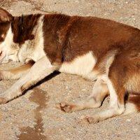 Это Шарик. Он единственный пёс в нашем подъезде. И он уже сегодня погулял 20 раз..:-) :: Андрей Заломленков
