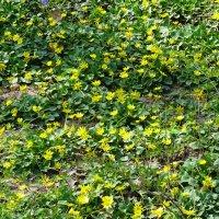 Весна. Веселая полянка :: Татьяна Р