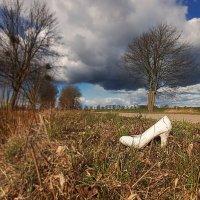 Золушка потеряла свою туфельку ...  :: donat