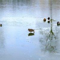 Ходят по воде аки по суху :: Вадим