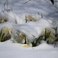 Под снежным одеялом :: Руслан Гончар