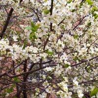 Торжество жизни и весны :: Елена Семигина
