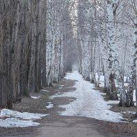 Весна идет, весне дорогу! :: Дарья Рогозина