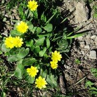 Цветы весны :: Татьяна Р