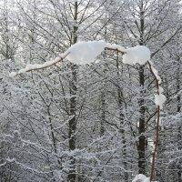 снег :: ИННА