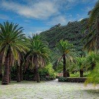 Jardin Botanico Viera & Clavijo 1 :: Arturs Ancans