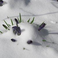 В снежном плену :: Маргарита