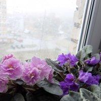 А за окном непогода... :: Люба