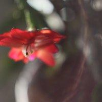 Цветочное настроение :: Елена Тренкеншу