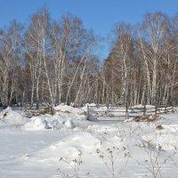 Зима,в Боровом... :: Георгиевич