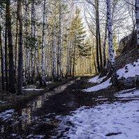 Просто весна ☺ :: Юрий Казарин