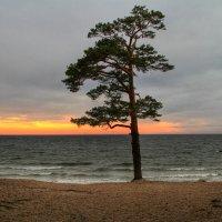 Закат на Балтике :: Cергей Кочнев